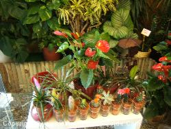 Just Some Of The Flowers And Plants Available At The Florists In Salou
