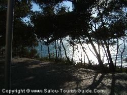The Walkway And Pine Trees Next To The Cala Font Hotel Salou